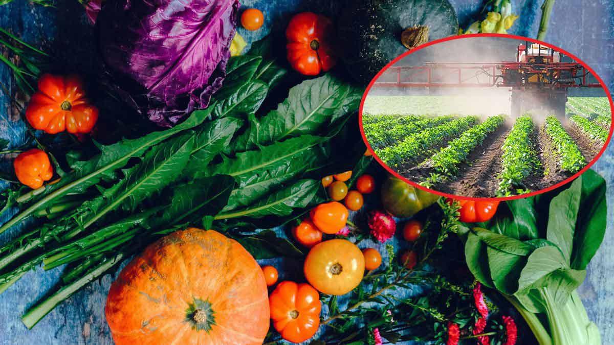 Fruit et légume : Quels les plus contaminé au pesticide ?