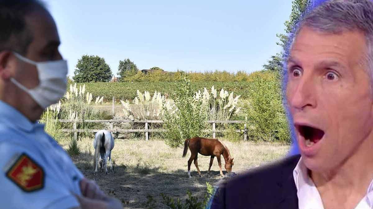 Nagui accusé de mutiler les chevaux... cette folle rumeur qui enflamme la Toile!